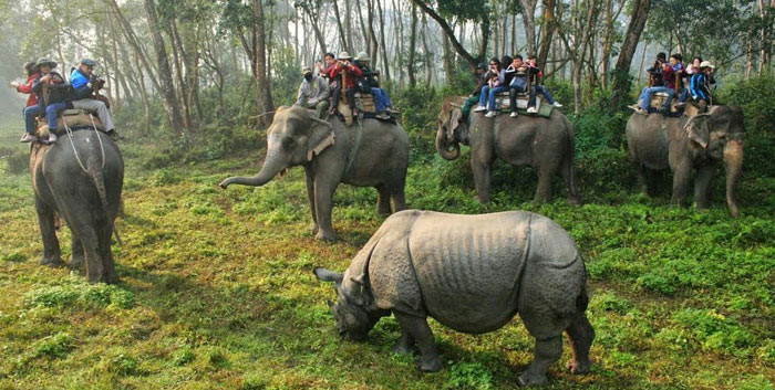 Nepal Tour Guides Rhino